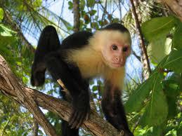 Le Costa Rica dans toute sa splendeur