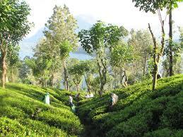 Voyage de rêve à travers le Sri Lanka